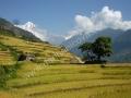 Nepal-06