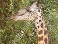 Východní-Afrika-06
